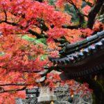 【伊豆高原】修善寺・天城湯ヶ島のおすすめ料理旅館5選!洗練された伝統はもはや文化遺産級