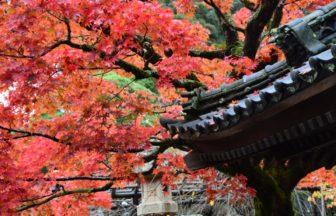 【伊豆】洗練された伝統料理はもはや文化遺産級。修善寺・天城湯ヶ島のおすすめ料理旅館5選